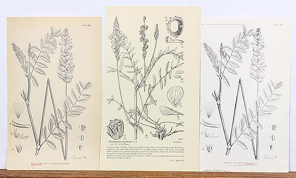 Clip Art Deaccessioned by the California Academy of Sciences.