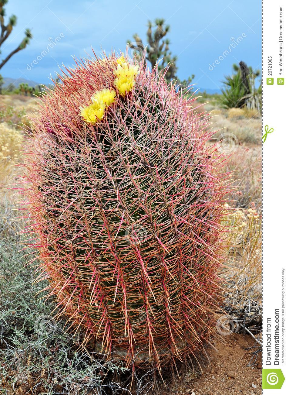 Barrel Cactus Clipart.