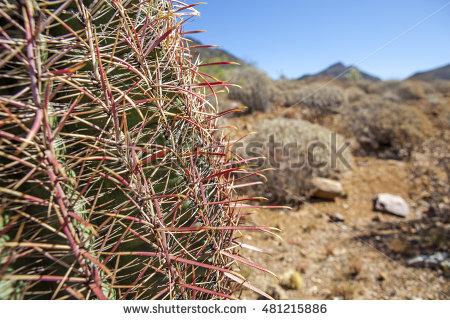 Arizona Barrel Cactus Stock Photos, Royalty.