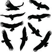 Condor Clip Art.