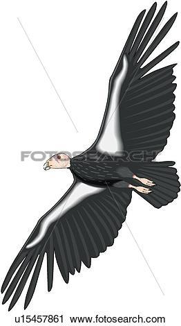 Clipart of California Condor u15457861.