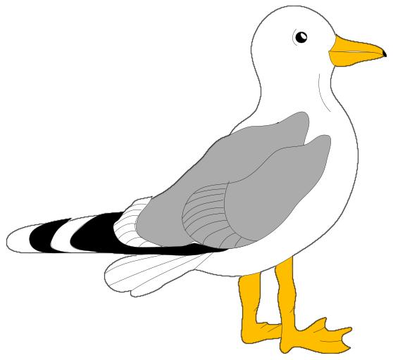 Gull clipart.