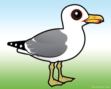 Cute California Gull by Birdorable < Meet the Birds.