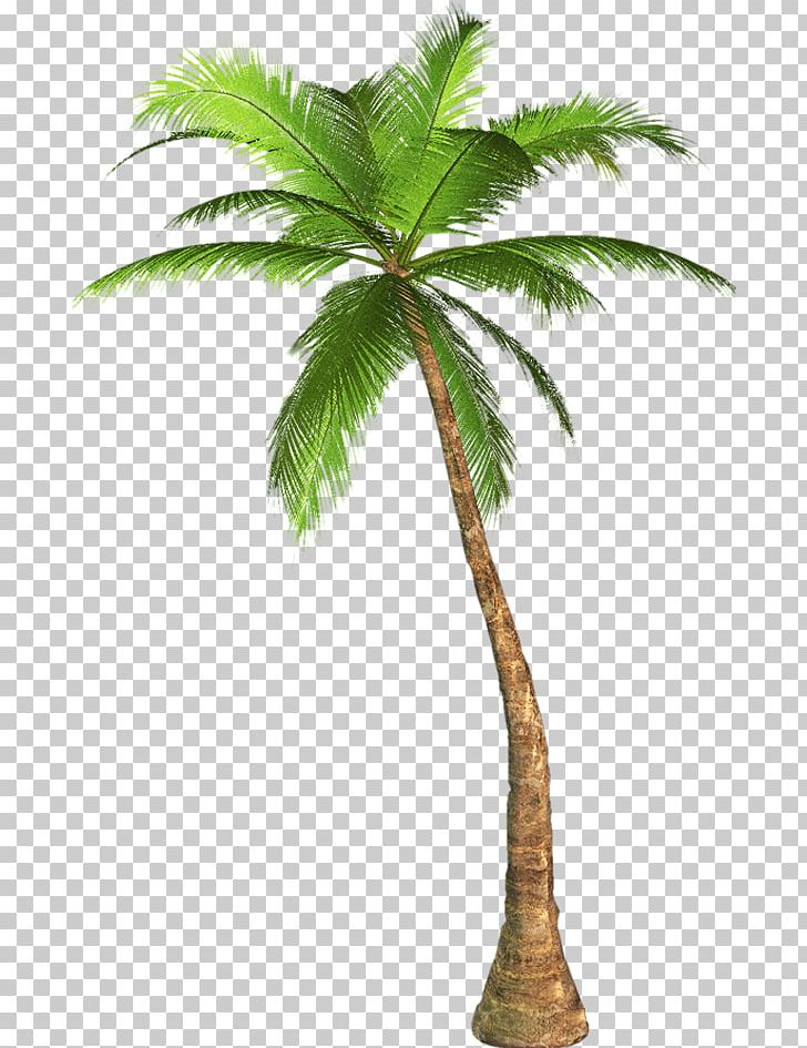 Palm Trees Mexican Fan Palm California Palm PNG, Clipart, Arecales.