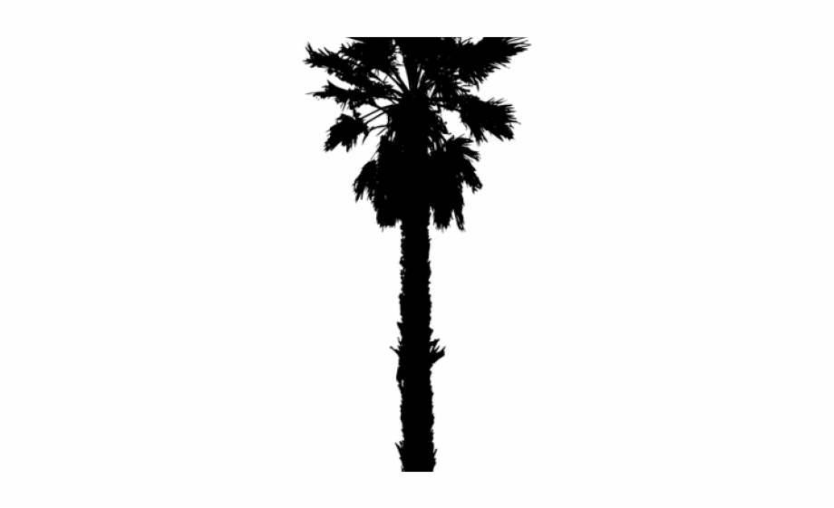 California Palm Tree Silhouette Free PNG Images & Clipart Download.