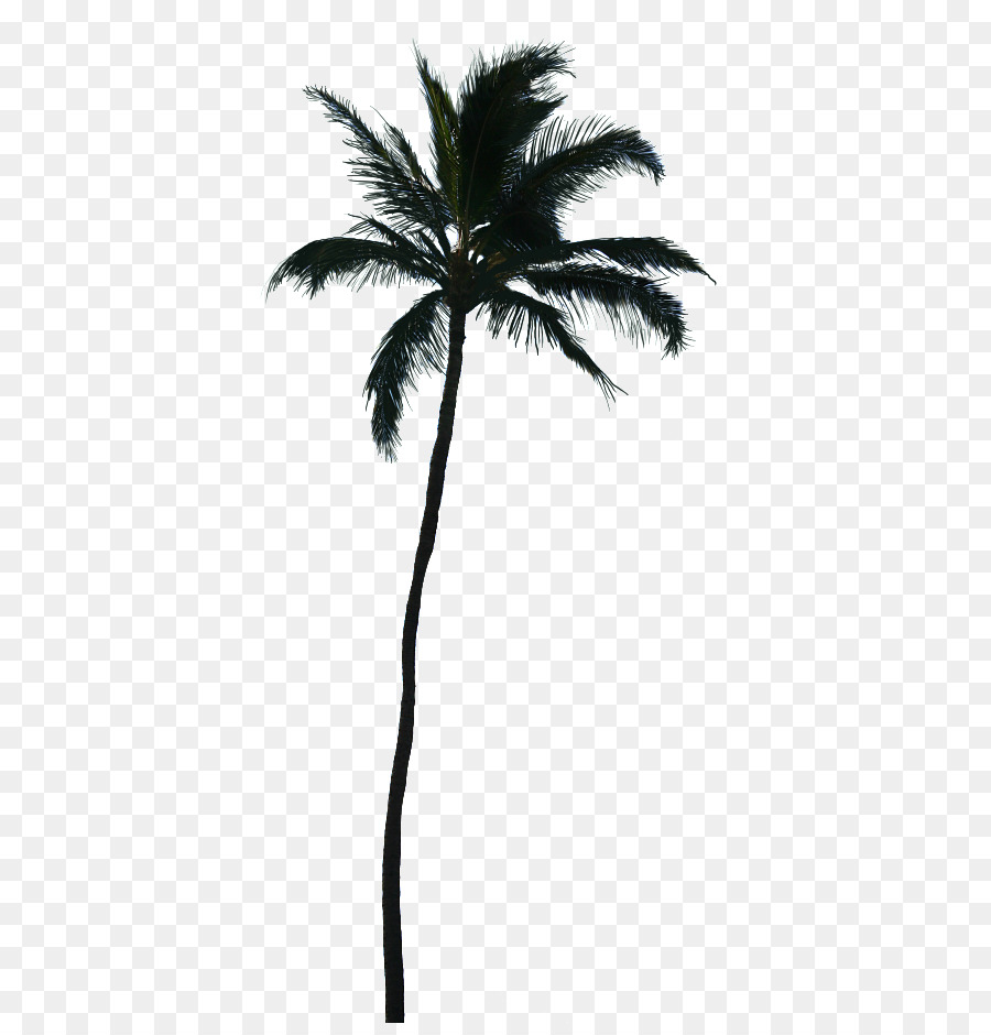 California palm Clip art Palm trees Portable Network Graphics Vector.
