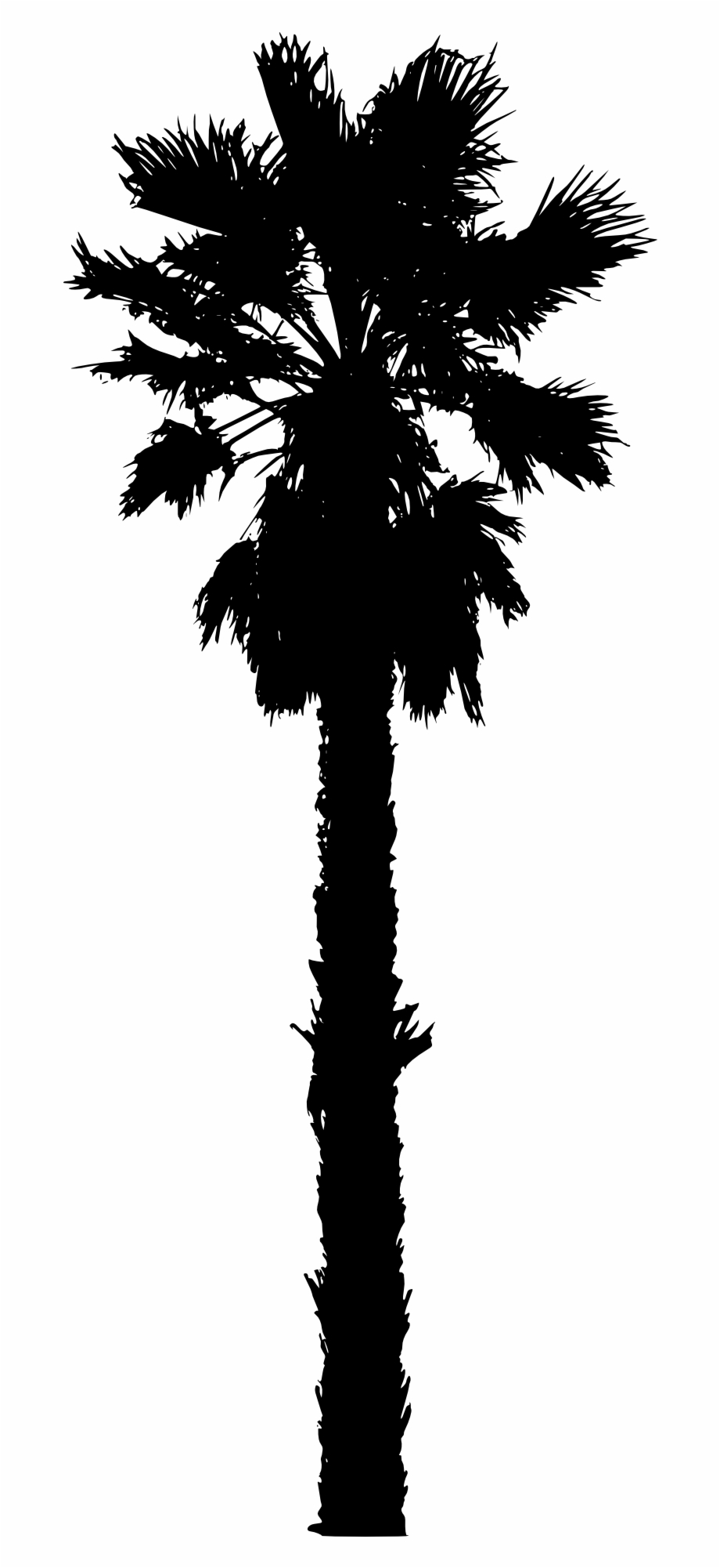 Isolated Palm Tree Silhouette.