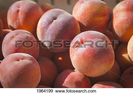 Stock Photograph of Peaches In The Sunlight; Berkeley, California.