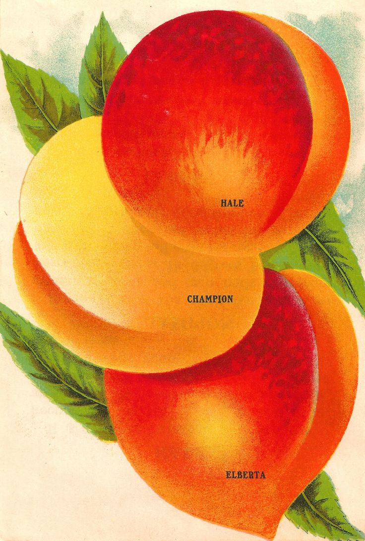 1000+ images about Peaches on Pinterest.