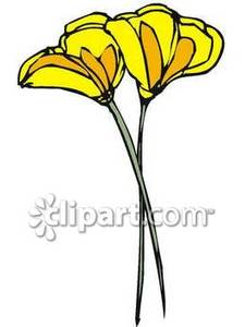 Yellow California Poppies on Long Stems Royalty Free Clipart Picture.