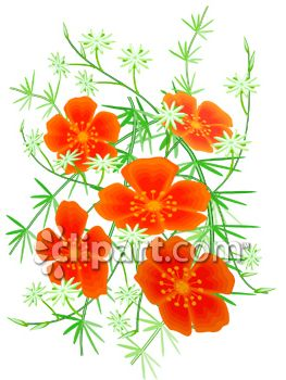 California Poppy Plant.