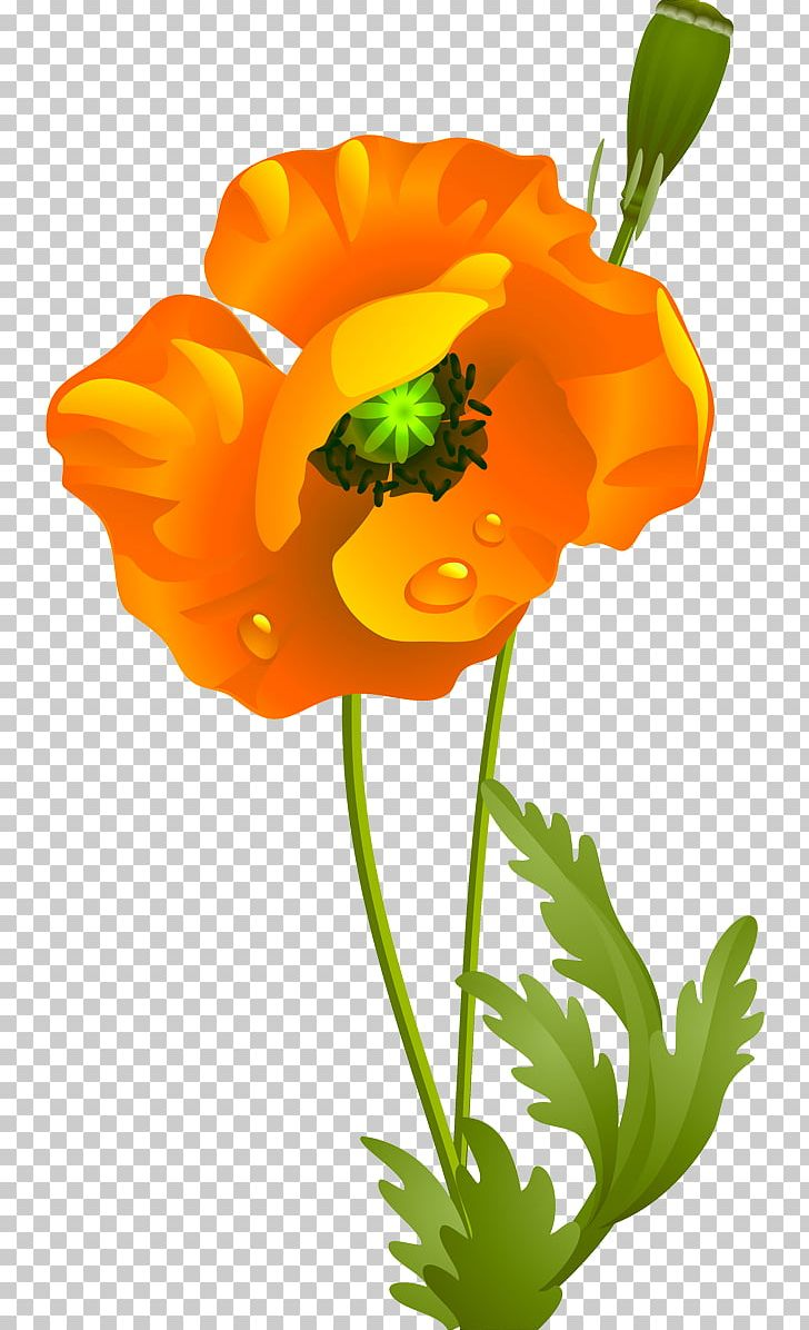California Poppy Cut Flowers Wildflower PNG, Clipart, Annual Plant.