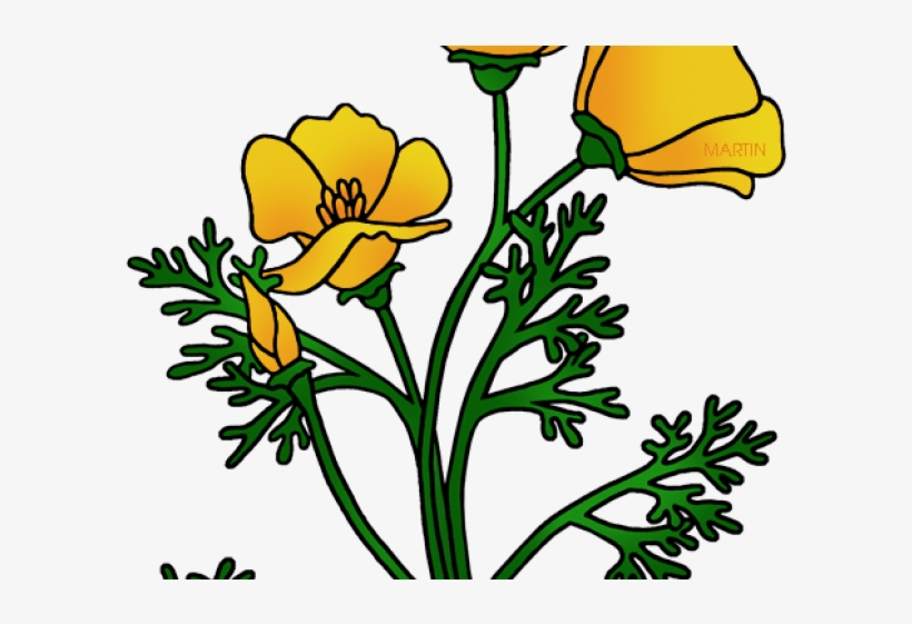 California Poppy Clip Art Transparent PNG.