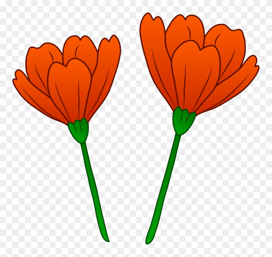 Picture California Poppy Clipart.
