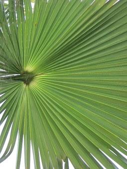 California, Palm.