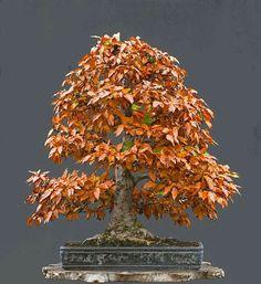 ֍♣How do you like this cute #bonsai tree?♥ᴥ #BonsaiInspiration.