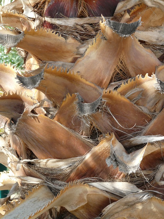 Free photo: Palm Tree Root, Tribe, Palm, Leaves.