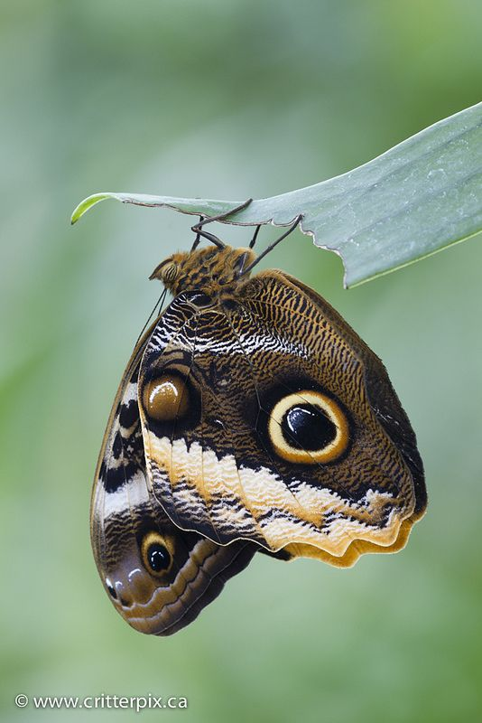 1000+ images about Butterfly Love on Pinterest.