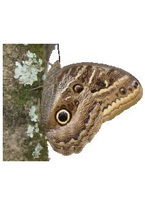 Borboleta Clip Art Download.