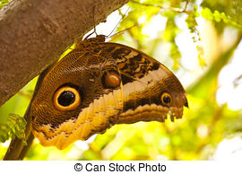 Stock Photo of Bananenfalter (Caligo Eurilochus).