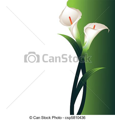 Calla Clipart and Stock Illustrations. 677 Calla vector EPS.