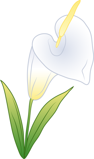 Single White Calla Lily.