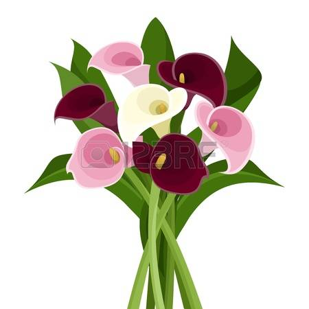 989 Calla Lily Stock Illustrations, Cliparts And Royalty Free.