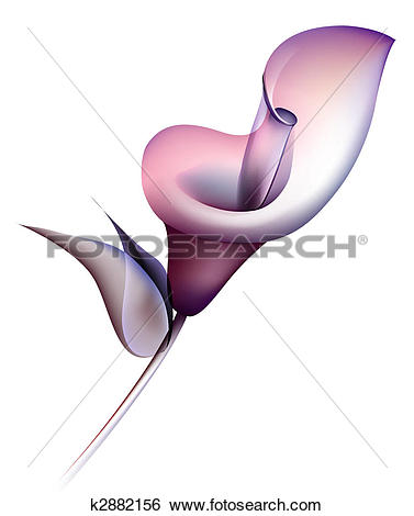 Calla lily Illustrations and Clipart. 287 calla lily royalty free.