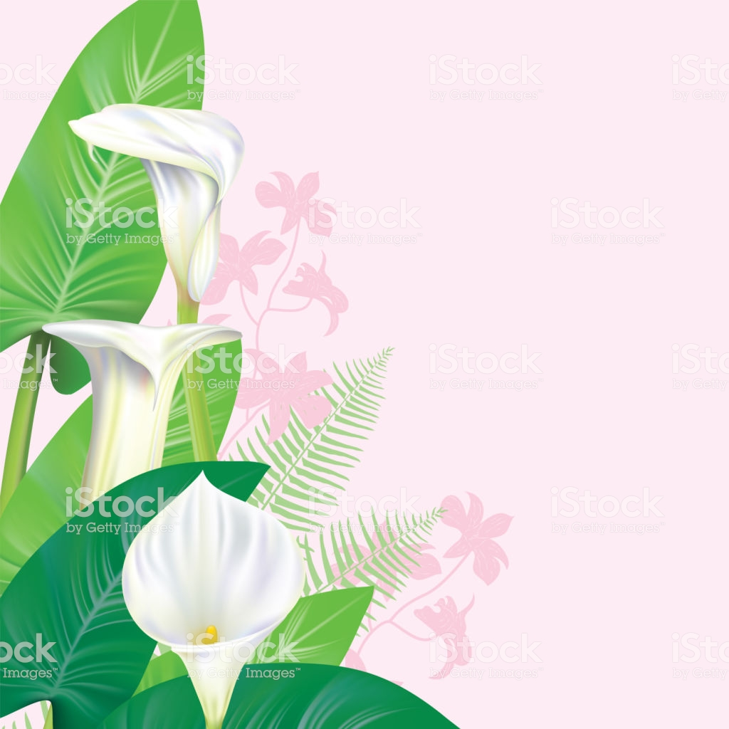 Calla Lily Border Stock Vector Art & More Images of Art.