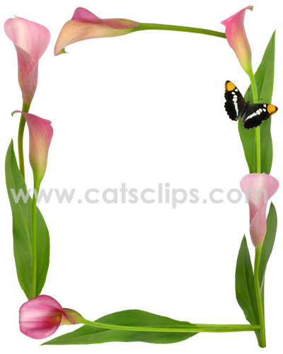 Pink Calla Lily Butterfly Border.