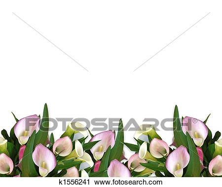 Calla Lilies pink Border Clip Art.