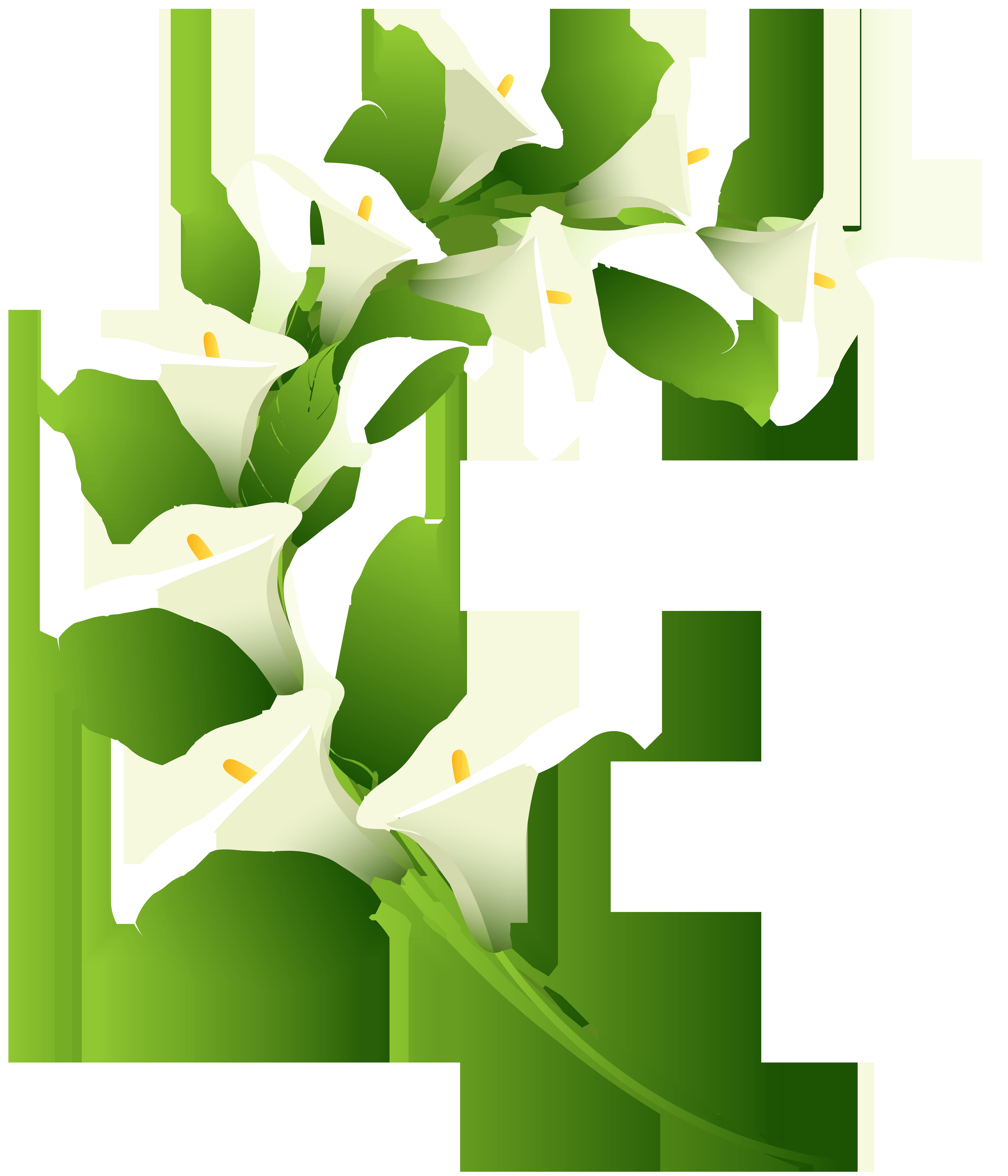 Calla Lily Decoration PNG Clip Art Image.
