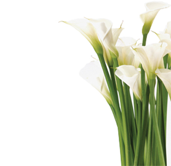 Free Pictures Of Calla Lillies, Download Free Clip Art, Free Clip.