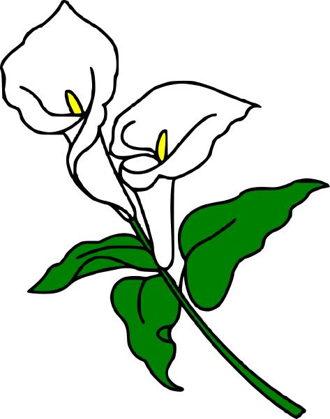 calla lily clipart.