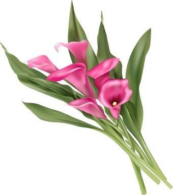 Calla lily clipart 4 » Clipart Portal.