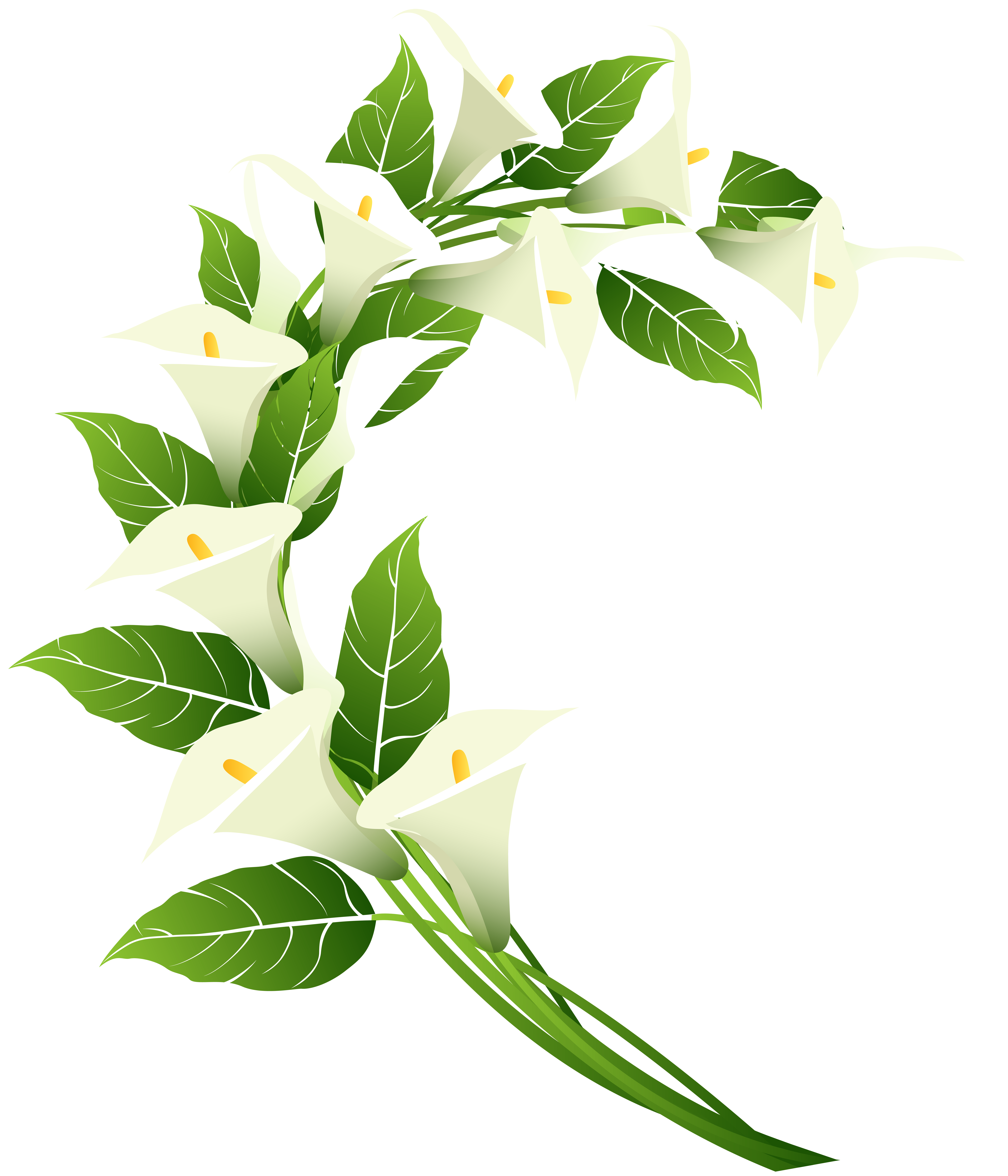Calla Lily Decoration PNG Clip Art Image.