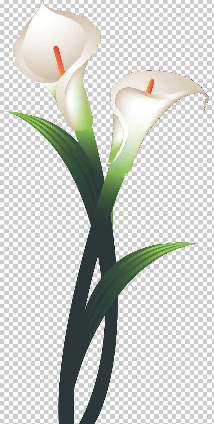 Tulip Flower Calla Lily PNG, Clipart, Calla, Calla Lily, Cut Flowers.