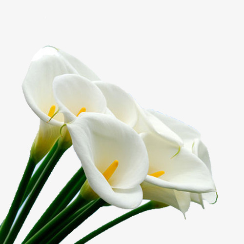 White Calla Flower Bouquet, Flower Clipart, White, Calla Lily PNG.