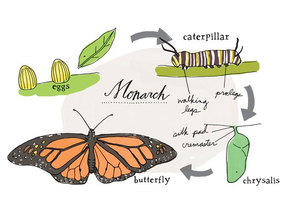 Nature Anatomy: A Glorious Illustrated Love Letter to Curiosity.