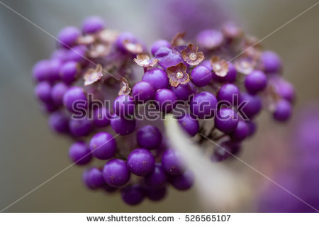 Deciduous Flowering Plants Stock Photos, Royalty.