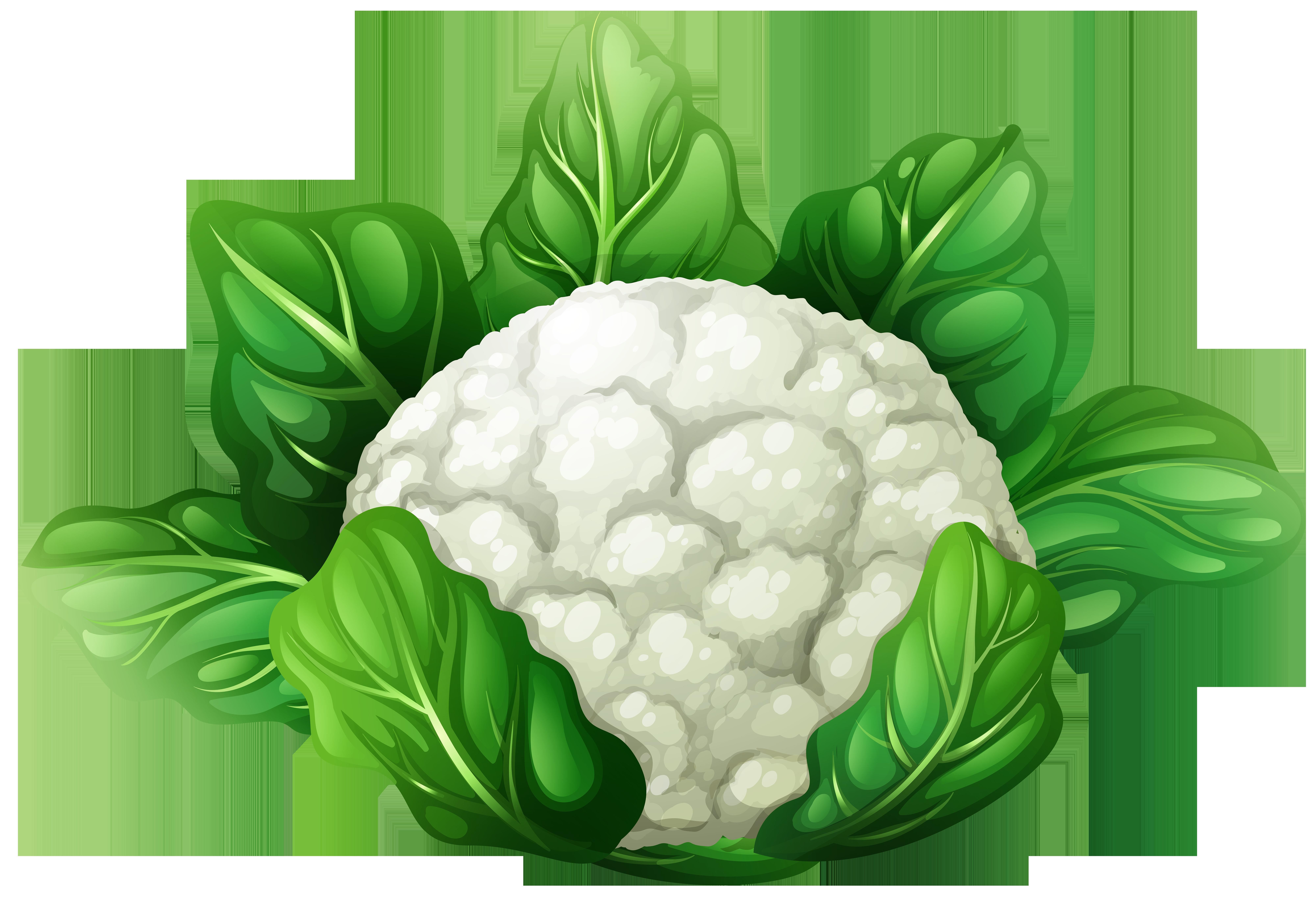 Cauliflower PNG Clip Art.