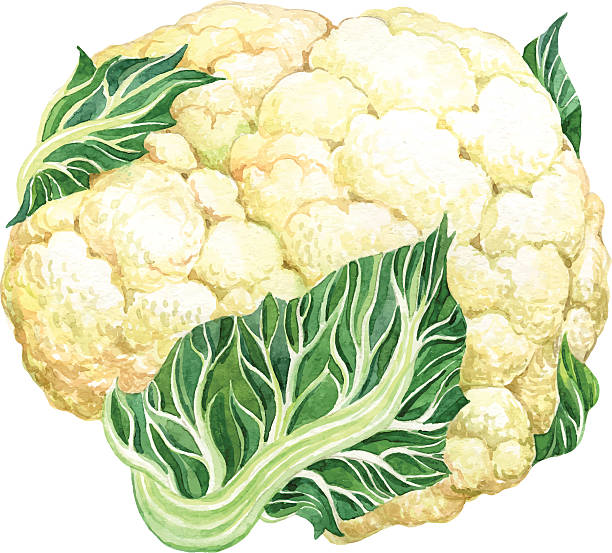 Cauliflower clipart 2 » Clipart Station.