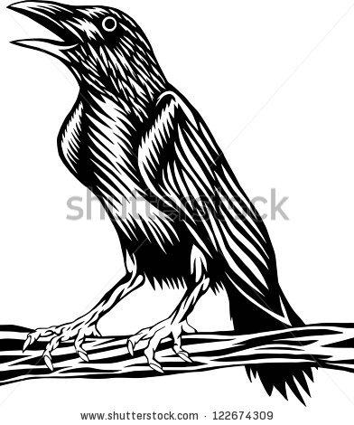 Raven Bird Stock Photos, Royalty.