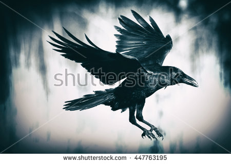 Raven Stock Photos, Royalty.