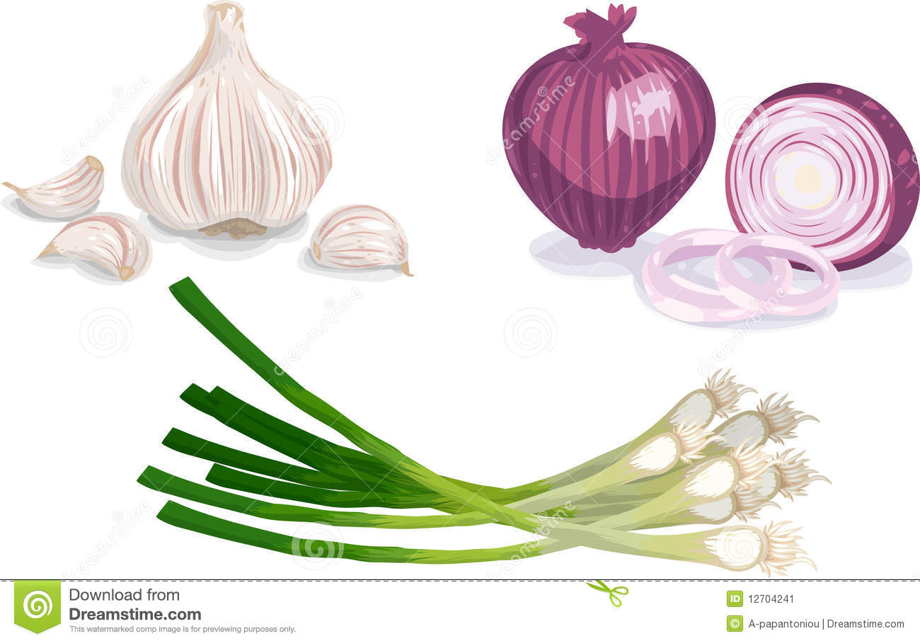 Scallion Stock Illustrations.