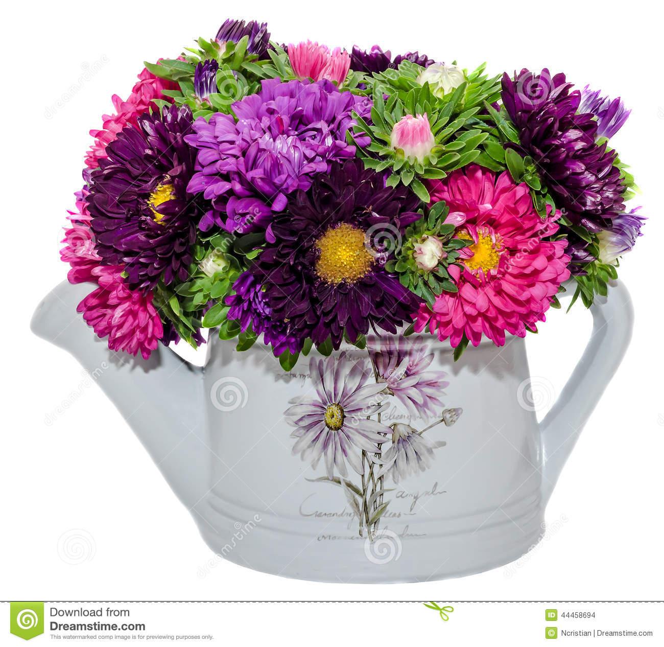 Vivid Colored Callistephus Chinensis Flowers Stock Photo.