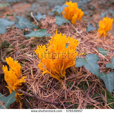 Fungus Yellow Stock Images, Royalty.