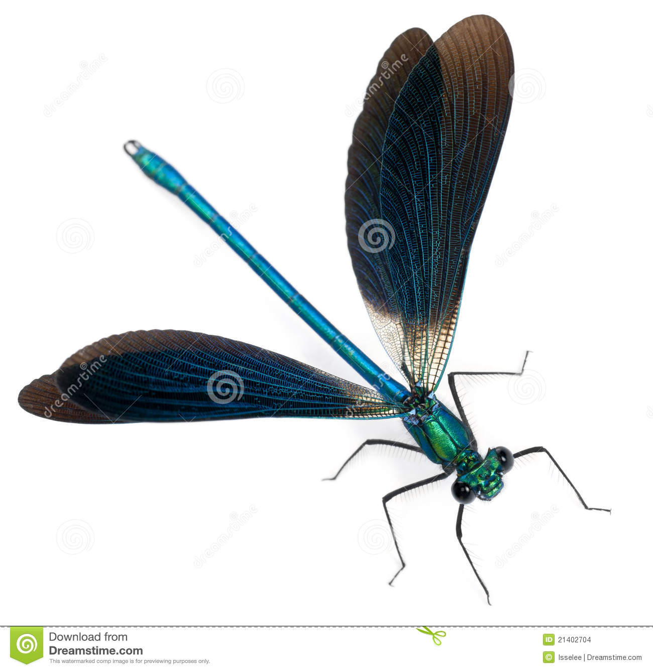 Male Banded Demoiselle, Calopteryx Splendens Stock Images.