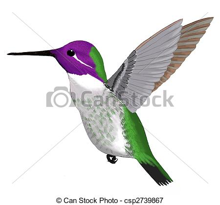 Stock Illustrations of Costas Hummingbird.