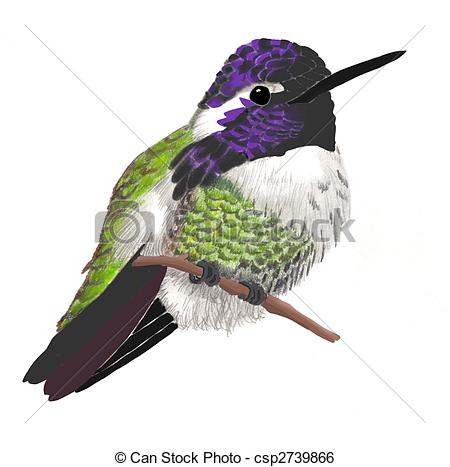 Stock Illustration of Costas Hummingbird.